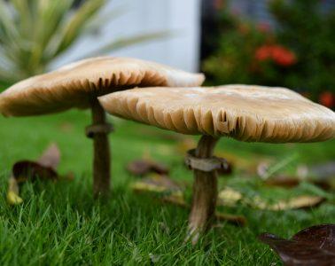 mushrooms_hires