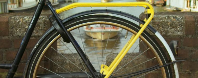 Yellow-Backie1